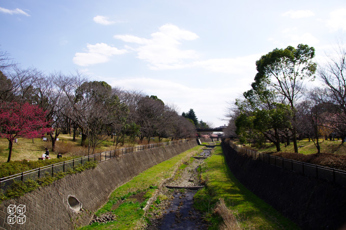 09.桜まだ.jpg