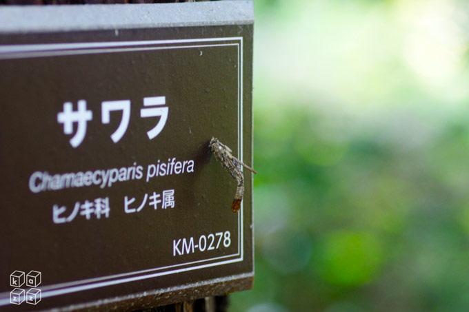 14.minomushi.jpg