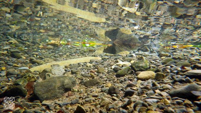 04.川の中.jpg