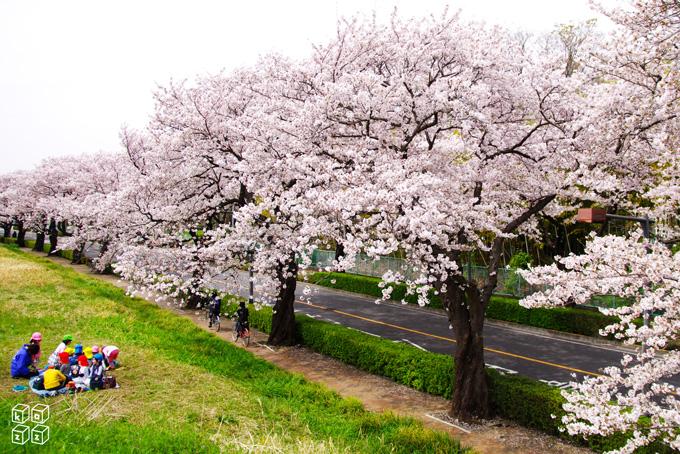 04.桜並木2.jpg