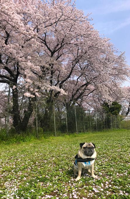 07.チョキと花見.jpg
