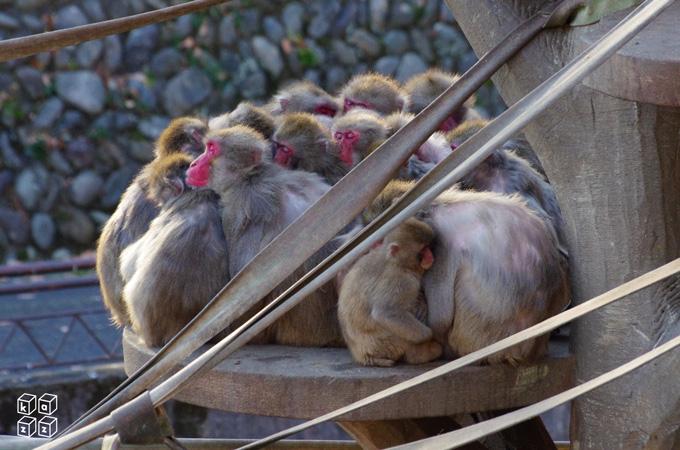 11.猿山.jpg
