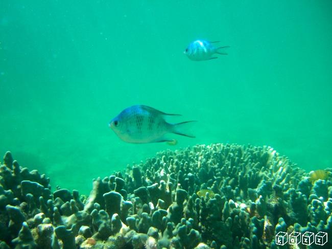 17.魚2.jpg