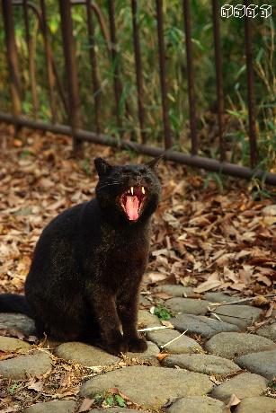黒猫1.jpg