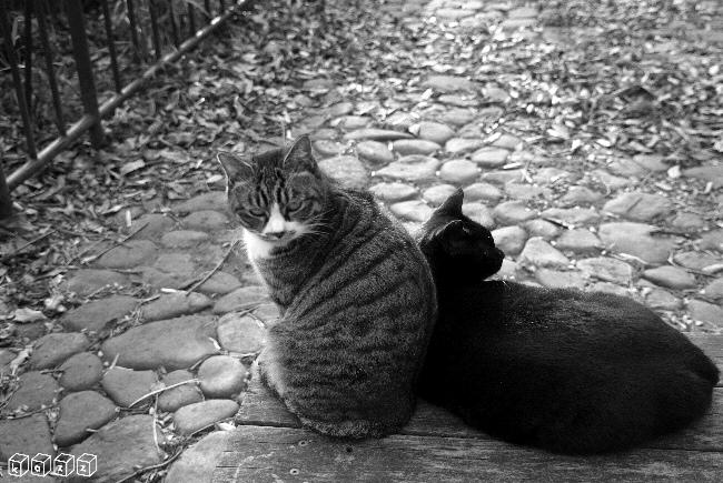 黒猫&トラ.jpg